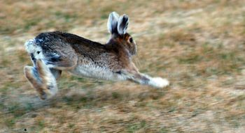 exercise jackrabbit