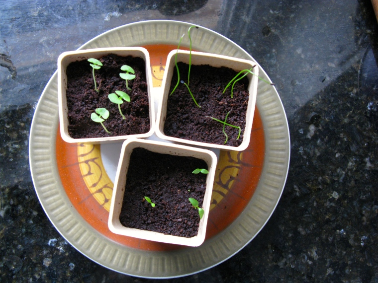 spring seedlings