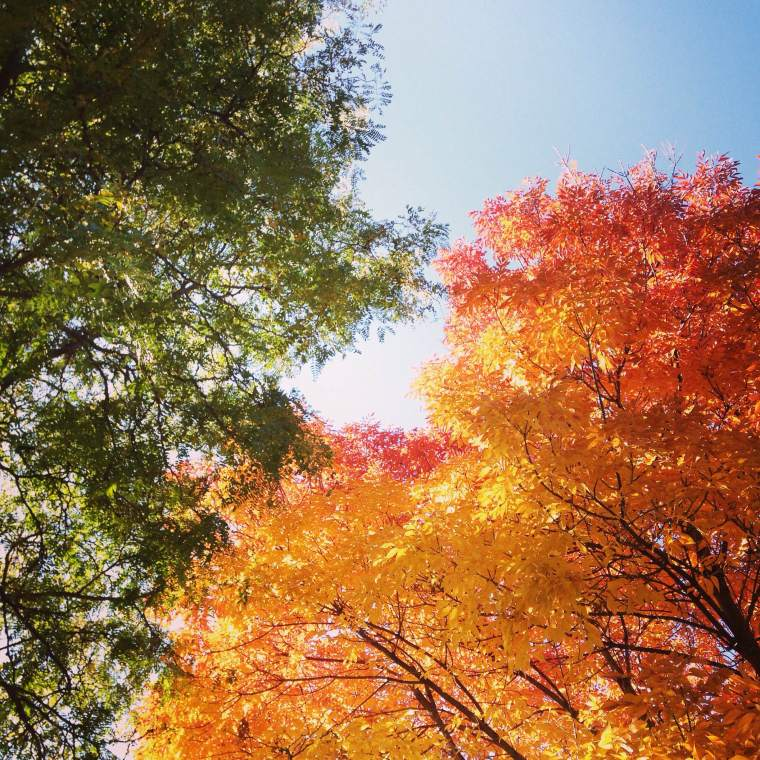Denver Autumn 2014