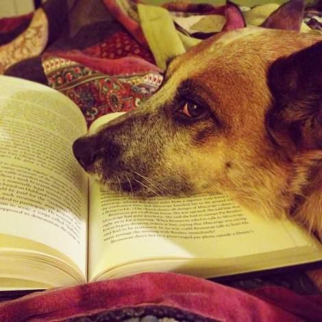 Charlotte the Dog